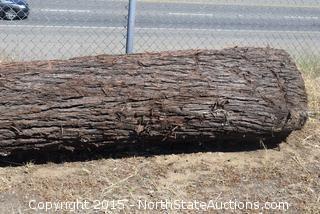 Large Log