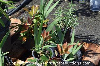Misc Lot of Plants